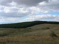 Pădurea_Runc_04